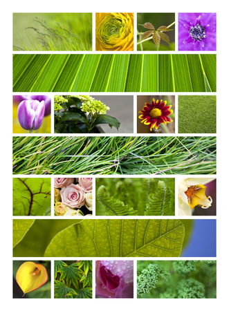 Flowers and green backgrounds on a collage