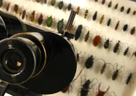 곤충의 실험실 연구에서 큰 돋보기의 세부 사항