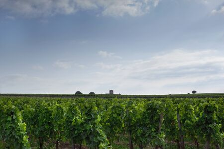 Vineyard landscape of the French Village St. Emilion in France