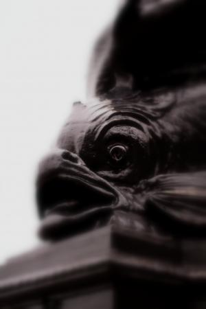 L'oeil du poisson Banque d'images - 16275339