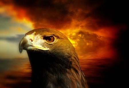 golden eagle against a firey red sky photo