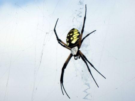 Garden Spider in web Stockfoto