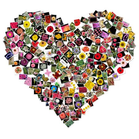flower collage in shape of heart photo