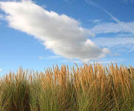 grass with clouds and blue sky photo