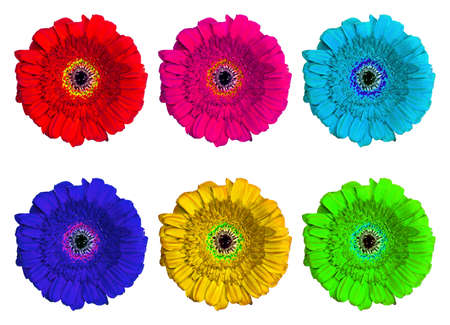 marguerite: Ensemble de six Multicolore Gerbera Fleurs Banque d'images