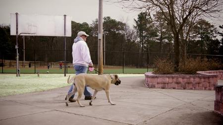 hond in het park