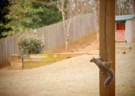 een eekhoorn in een achtertuin Stockfoto