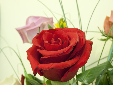 roseleaf: The beautiful rose in the bouquet