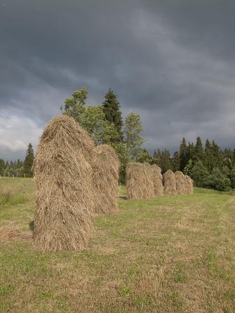 hayrick: Natural seasoning of hay in Poland