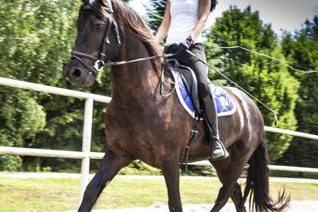 Reiterin zu Pferd. Reiten, Lifestyle