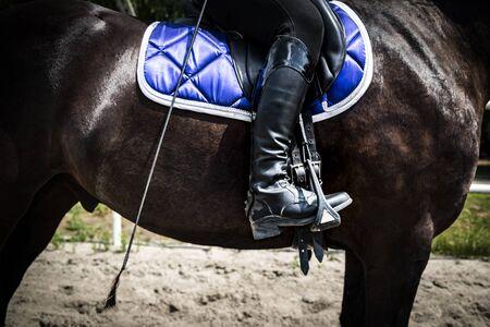 Female rider on horseback. Horse riding, lifestyle