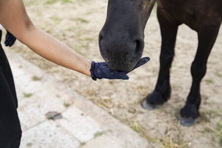 Stable, a woman cares for and feeds the horse