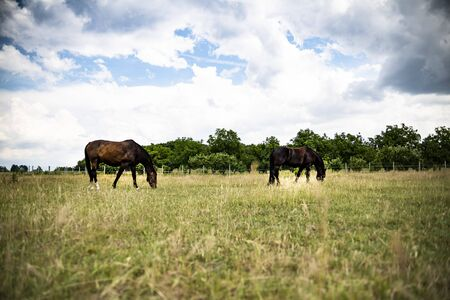 The horse grazes in a meadow