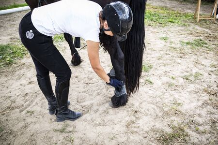 Stable, a woman cares for the horse. Putting on horses leg protectors. 写真素材