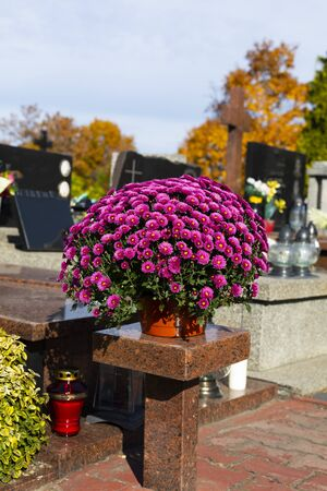 Beautiful pink chrysanthemums in a cemetery, in a pot. Flowers and graveyard candles on a granite tombstone. The All Saints' Day traditions and customs. Фото со стока