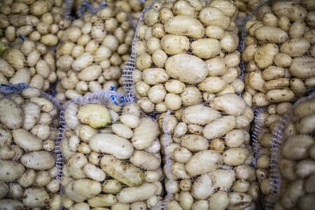 Big net bags full of freshly harvested and washed potatoes. Potatoes storage on a farm. Veggies ready for transportation.