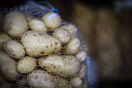 Big net bag full of freshly harvested and washed potatoes in a dark warehouse. Potatoes storage on a farm. Veggies ready for transportation.