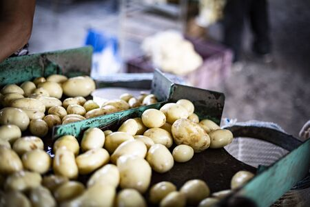 Packing freshly harvested and washed potatoes into net bags in a farm storage. Farm during potato-lifting. Harvest time in a countryside.