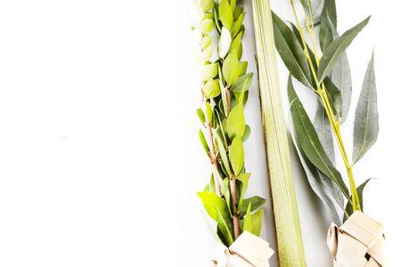 Composición de los símbolos del festival judío de Sucot. El lulav - conjunto de cuatro especies: etrog, fronda de palmera, mirto y ramitas de sauce sobre fondo blanco.