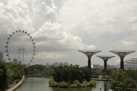 singapore flyer and garden by the tree