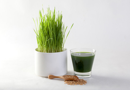 Wheat grass juice on white background Banque d'images