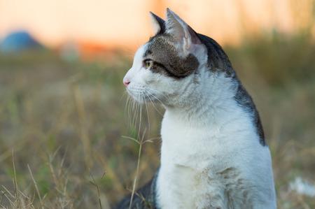 candid: Candid of thai cute cat.