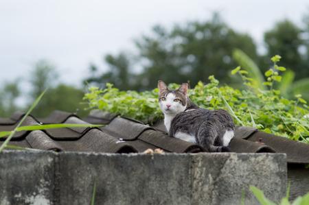 Candid of thai cute cat.