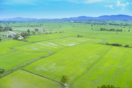 Top view of beauty green field with blue sky.
