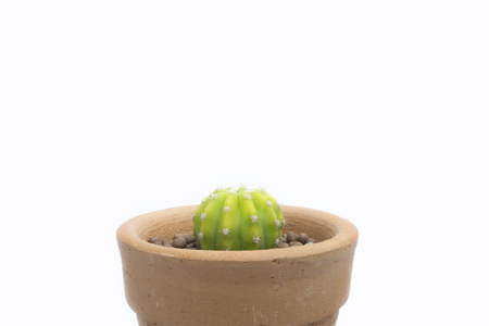 Light green cactus in potto wtih white background.