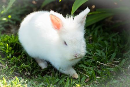 Little white rabbit in garden. Stock Photo