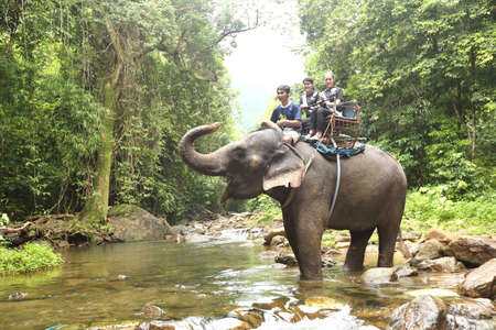 chang: Bangkok, Thailand - July 4, 2017 ; Camping Outting Trip of Miss Tourism Queen Thailand 2017 at Koh Chang, Trat. Elephant ride in deep forest junglle on top seat Editorial