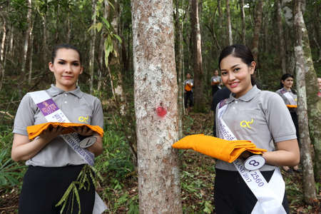 chang: Bangkok, Thailand - July 4, 2017 ; Camping Outting Trip of Miss Tourism Queen Thailand 2017 at Koh Chang, Trat. Tie yellow fabric to the tree to protect from cutting