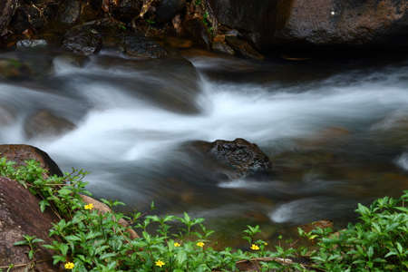 flowing water: Small Waterfall in shallow river in deep forest jungle, long exposure for blur smooth flow of water