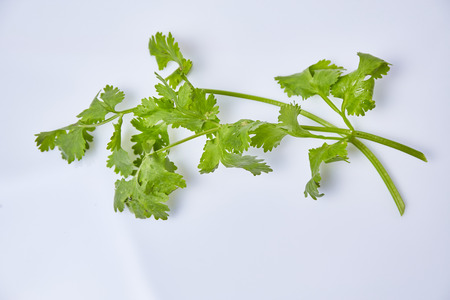 asian flavors: Coriander on white background