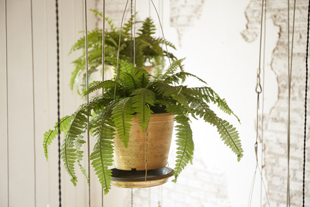 Pot of hanging plant