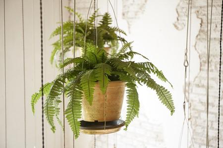 Topf mit hängenden Pflanzen