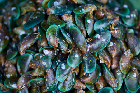 Asian green Mussels background