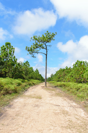 phukradueng: tree in the street