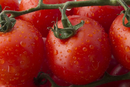 Fresh Ripe Tomatoes on the Vine photo