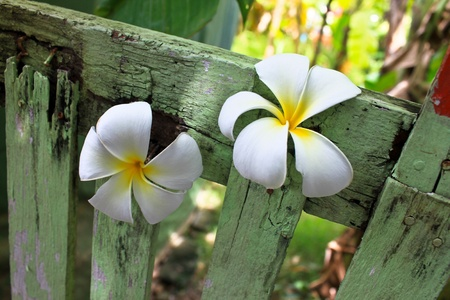 Flower on the wood wall in Thailand Stock Photo