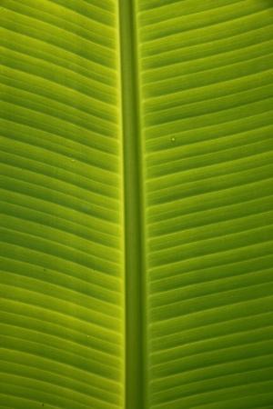 Pattern on banana leaves photo