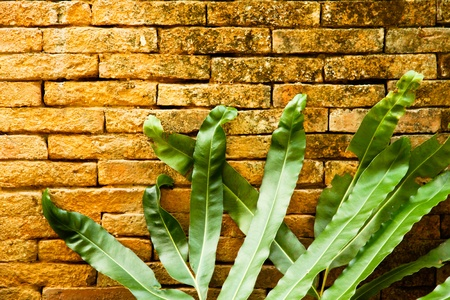 Leaves on brick wall Stock Photo
