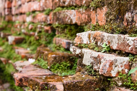 Moss on brick wall photo