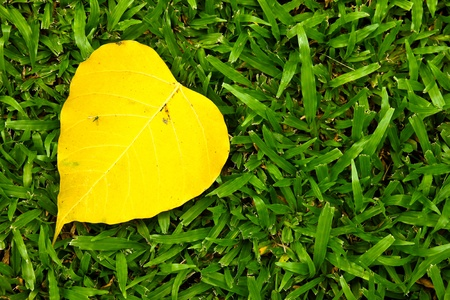 Yellow leaf on grass Stock Photo