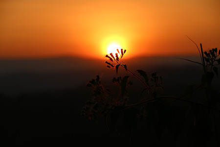 Flower Silhouette At yellow Sunset