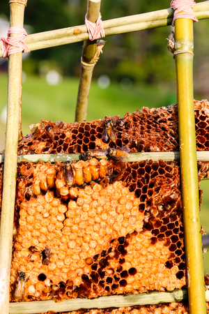Worker Bees on Honeycomb. Stock Photo