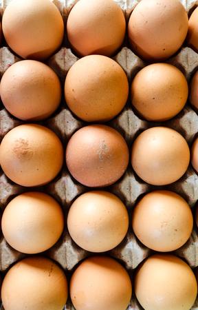 Raw chicken eggs in carton.