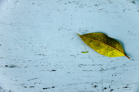 Leaf on wood background