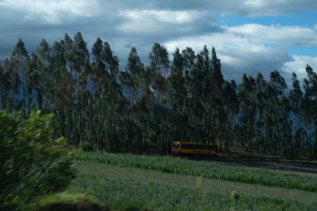 Beutiful rural fields in ecuador with a mountain in the bacj¡kground ans some yellow plants