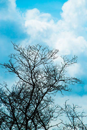 A dry tree is a plant that for some reason has stopped receiving the main nutrients that keep it alive (water, sunlight, and carbon dioxide).